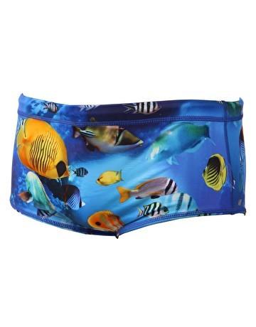 Boxer Maru Nemo Pacer